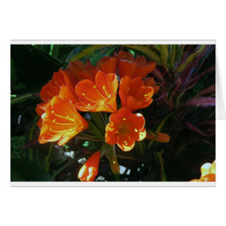 Brilliant Orange Kafir Lillies Card