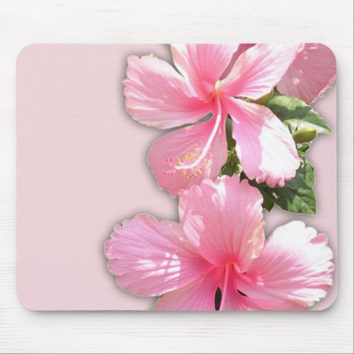 Brilliant Pink Hibiscus Flowers Mousepads
