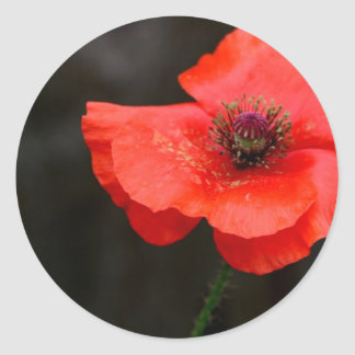 Brilliant Red Poppy Classic Round Sticker