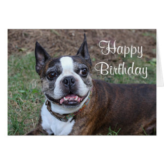 Brindle and white Boston terrier Card