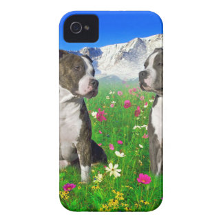 Brindle & Blue Staffordshire & Pit Bull Dogs iPhone 4 Cover