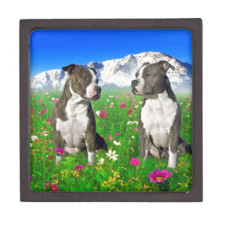 Brindle & Blue Staffordshire & Pit Bull Dogs Premium Keepsake Box