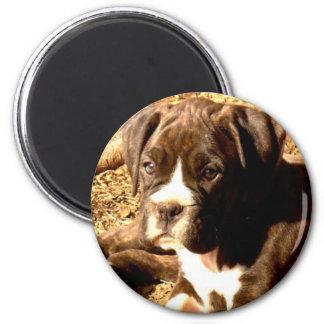Brindle Boxer pup magnet