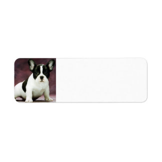 Brindle_pied_french bulldog puppy return address label