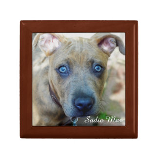 Brindle Pit Bull Puppy by Shirley Taylor Keepsake Box