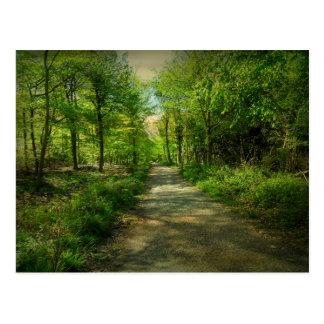 Bristol Avon Forest in Spring. Postcard
