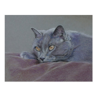 british blue shorthair cat painting postcard