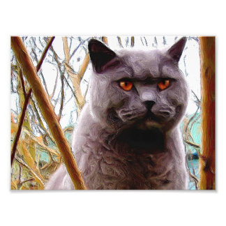 British blue shorthaired cat photo print