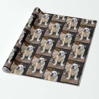 British bull dog wrap wrapping paper
