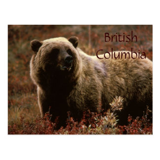 British Columbia grizzly bear postcard