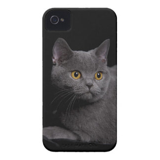British Shorthair Barely There™ iPhone 4 Case