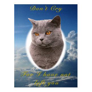 British Shorthair blue Pet Sympathy Card Postcard