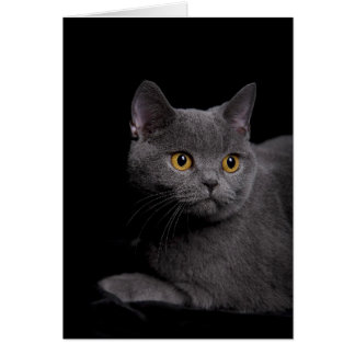 British Shorthair Card
