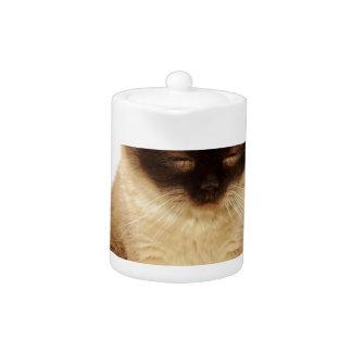 British Shorthair Cat Pet Mieze British Short Hair
