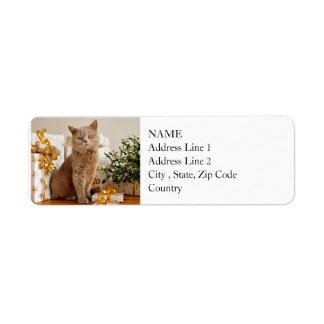 British Shorthair Cat Purr-fect Holiday Season
