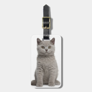 British Shorthair Kitten (10 weeks old) 2 Luggage Tag