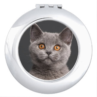 British Shorthair kitten (3 months old) Compact Mirror