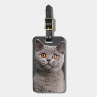 British Shorthair kitten (3 months old) Luggage Tag