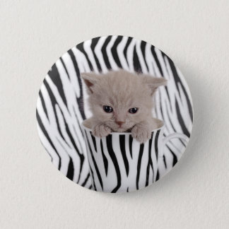 British shorthair kitten in mug 2 inch round button