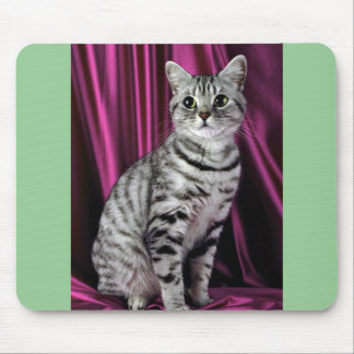 British Shorthair, silver spotted Mouse Pad