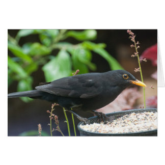 British Songbirds: male blackbird Card