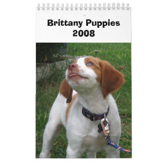 Brittany Puppies 2008 Wall Calendars
