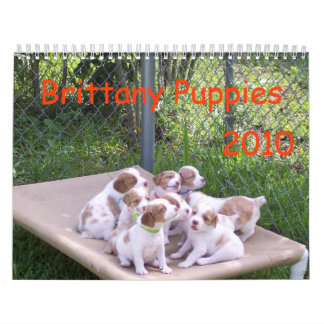 Brittany Puppies 2010 Wall Calendar