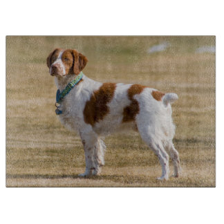 brittany-spaniel full cutting board