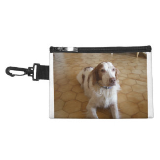 brittany spaniel laying accessory bags
