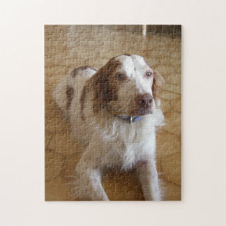brittany spaniel laying puzzle