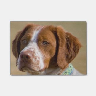 brittany-spaniel.png post-it notes