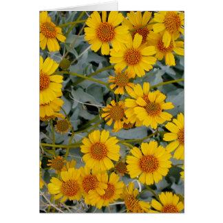 Brittlebush Flowers Greeting Card_customizable Card