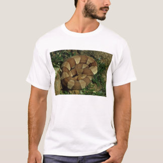 broad-banded copperhead snake mens t-shirt