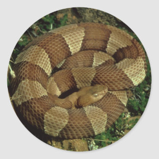 broad-banded copperhead snake stickers