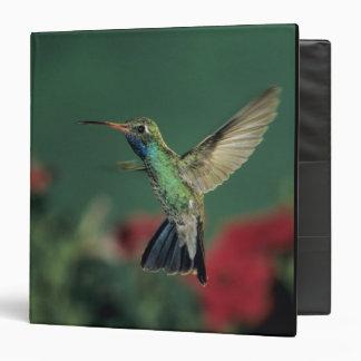Broad-billed Hummingbird, Cynanthus Vinyl Binders