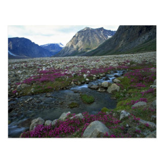 Broad-leafed willow herb and stream, Baffin Island Postcard
