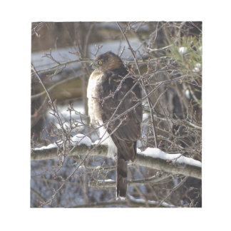 Broad-winged Hawk Notepad
