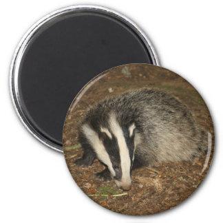 Brockwatch badger magnet