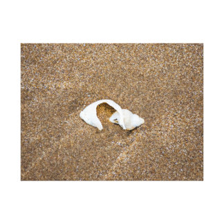 Broken shell canvas print