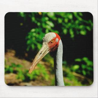 Brolga bird portrait mouse pad