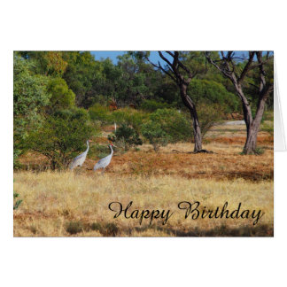 Brolgas in the outback blank birthday card