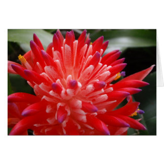 Bromeliad Flower Card