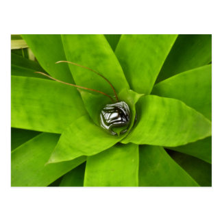 Bromeliad Green Nature Botanical Photography Postcard