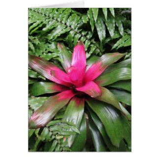 Bromeliad with Ferns Card