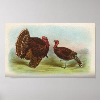 Bronze Turkeys Poster