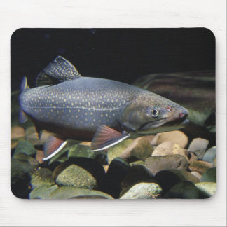 Brook Trout - Mouse Pad
