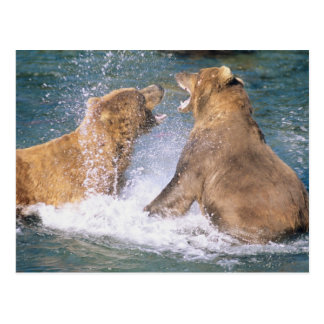 Brooks River, Katmai National Park, Alaska.  Two Postcard