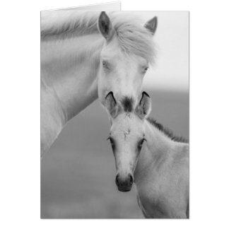 Brothers Wild Horse Greeting Card