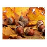 Brown Acorns On Autumn Leaves, Close Up Postcard