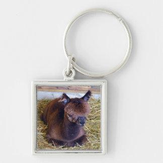 Brown Alpaca Keychain